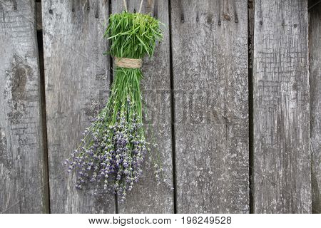 Bunches of lavender hanging on the old wooden wall