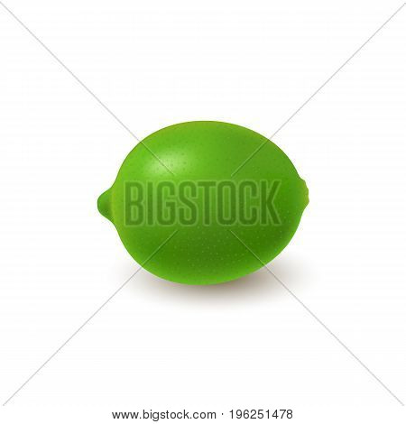 Isolated colored whole juicy lime with shadow on white background. Realistic citrus fruit