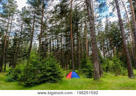 One Blue And Red Tent In Forest
