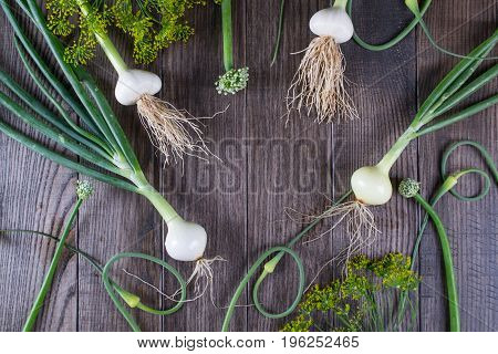 Young green garlic  and onion with Arrows on dark wooden background. Young green garlic  and onion with Arrows on dark wooden background. Cooking background