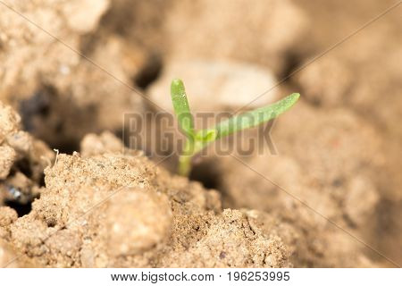 little sprout in the ground in nature