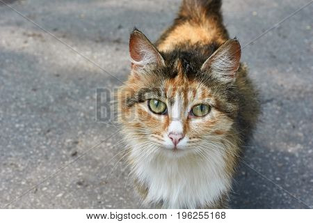 Portrait of a cat on a background of the road.