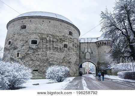 TALLINN ESTONIA - FEBRUARY 23 2016: Fat Margaret's Tower in Old Town of Tallinn Estonia. Old Town is listed in the UNESCO World Heritage List