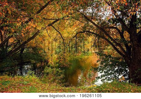 Autumn landscape with trees with yellow and red leaves on the shore of the pond.