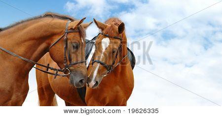 dos caballos alazán