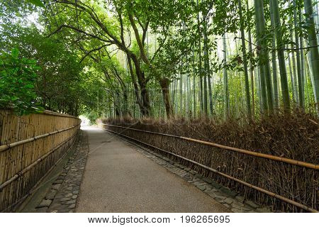 Green Bamboo forest in Kyoto