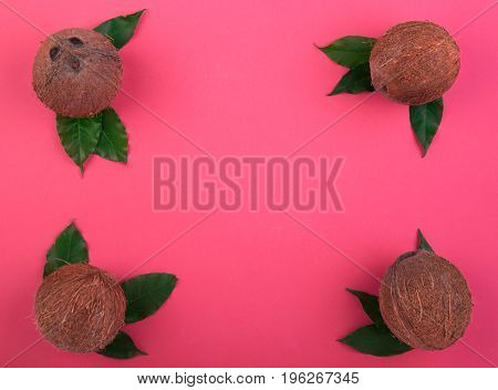 A composition of a group of hard coconuts on a bright pink background. Perfectly organized coconuts full of tasty vitamins with green leaves. Summer, nature, freshness concept.