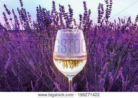 A glass of white wine against a lavender field, with the reflection of the flowers in it, with a teal blue sky in the background, with a place for text, toned image