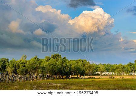 Monumental Huge Clouds