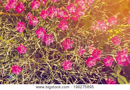 Background of fresh green leaves and small pink flowers. Green background with leaves and pink flowers. Flat lay free space. Natural floral background toned