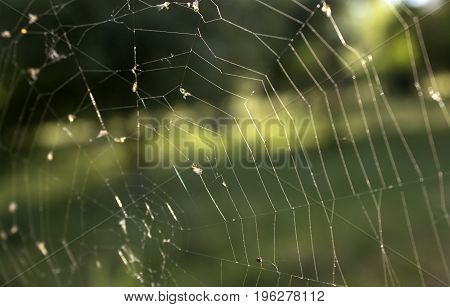 Old web in the forest, summer morning