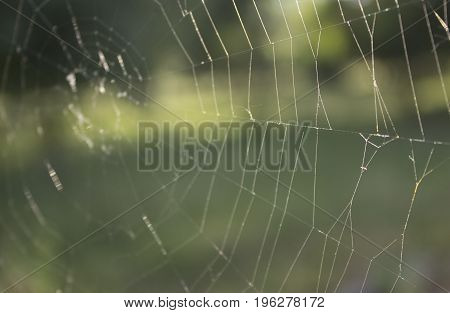 Abandoned cobweb in the forest, a summer morning