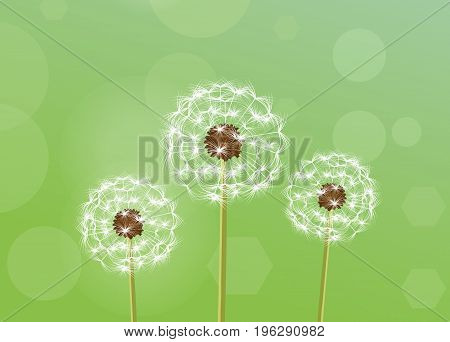 Beautiful background with the image of dandelions. Vector illustration of flowers