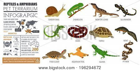 Pets_reptiles And Amphibians_7