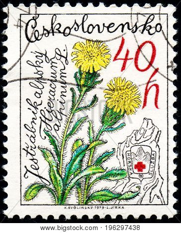 UKRAINE - CIRCA 2017: A stamp printed in Czechoslovakia shows Alpine Hawkweed Hieracium alpinum from series Nature Protection circa 1979