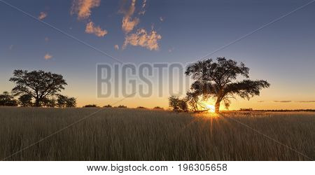 Kalahati sunset with trees grass and blue sky and road