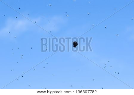 A spider hanging on his web waiting for the prey