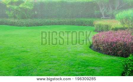 Fog sparse into the green lawn, for background on the front lawn, landscape design, garden.