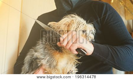 a thief in a mask with a knife broke into the apartment and wants to kill a Yorkshire Terrier.