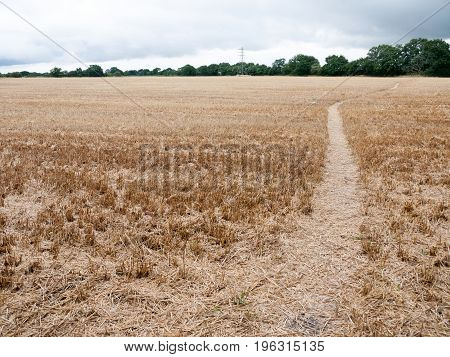 Walk Path Through Harvested Crop Field Uk Summer Overcast