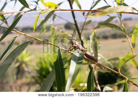 a grasshopper waiting on a leaf in a calm enviroment