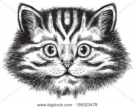 Vector sketch of a long-haired tabby cat's face front view
