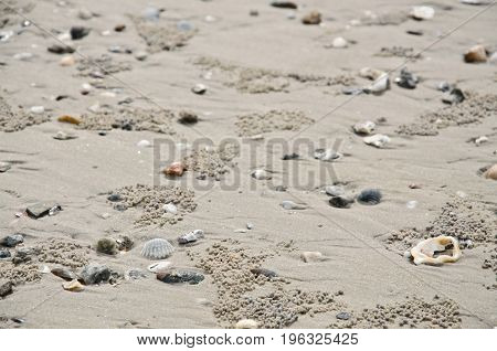 sea shells and star on a sandy beach. Clams, starfish and spiral seashell laying in the sand forming a frame and a background with copy space.