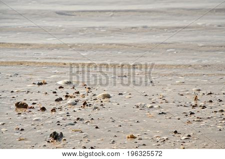 Shells On Sandy Beach For Background