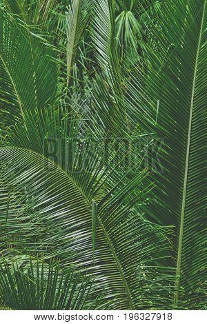 coconut leaf for background summer vintage tone
