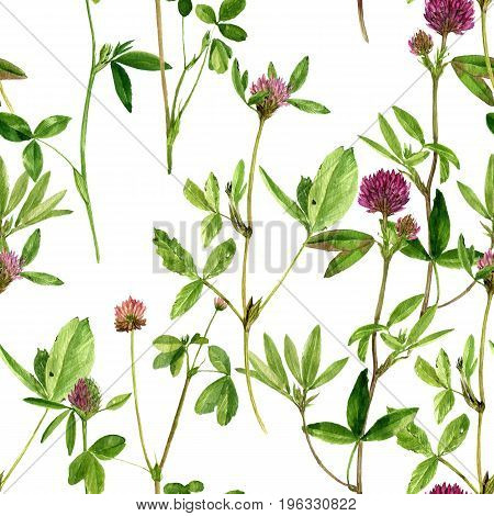 Seamless pattern with watercolor drawing wild plants with flowers, buds and leaves, painted botanical illustration in vintage style, color floral ornament, hand drawn natural background