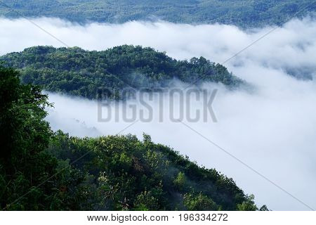 White Clouds Of Mist Hovering Low Between Green Trees In The Early Forest Morning.