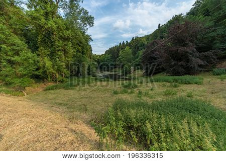 Stream flows through the pristine beauty of a green european wood forest.