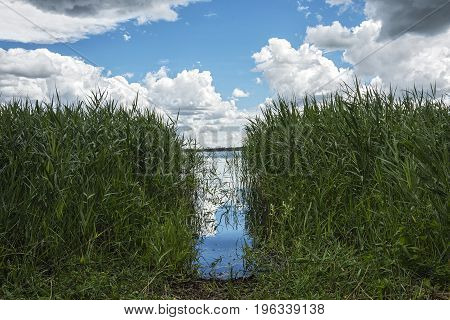 In the coastal reeds a passage to the water is made