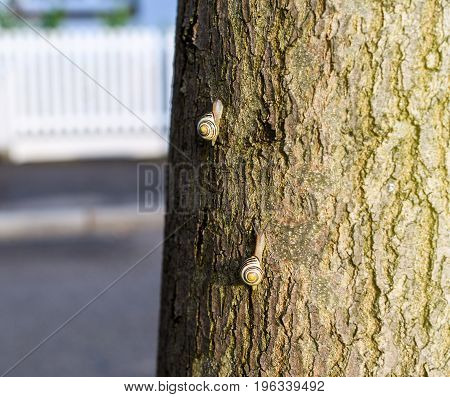 Competition concept - two snails competing on a tree who will arrive the first at the top