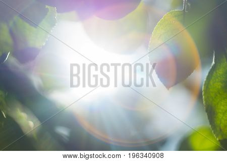 close up apple tree with sun flares in sunny summer day
