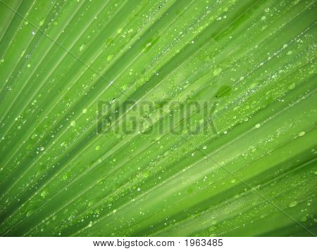 Wet Palm Frond