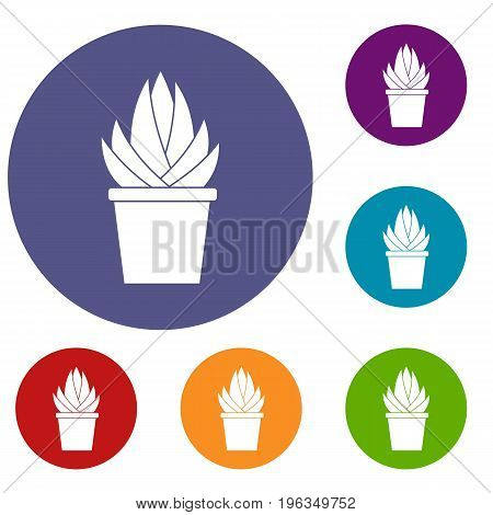 Aloe vera plant icons set in flat circle red, blue and green color for web