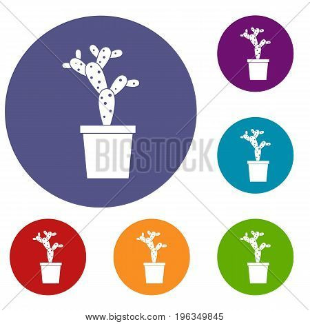 Opuntia icons set in flat circle red, blue and green color for web
