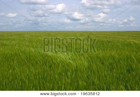 Clouds over Green Field