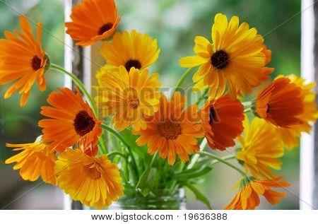 Closeup of orange flowers on window-sill. Calendula Officinalis L.
