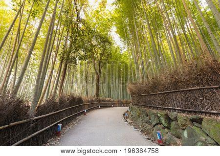 Walking path over bamboo garden Kyoto Japan natural landscape background