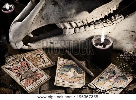 Scary skull with the Tarot cards, herbs, pencil and black candles. Mystic still life with scary occult objects, horror Halloween and black magick concept, fortune telling or divination rite