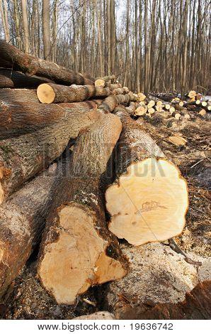 wood felling