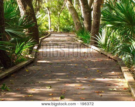 Nature_boardwalk