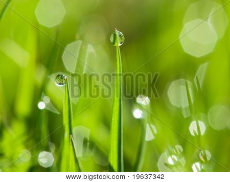 morning dew drops on the green grass