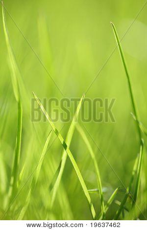 Green grass background. Shallow focus depth on front blades of grass