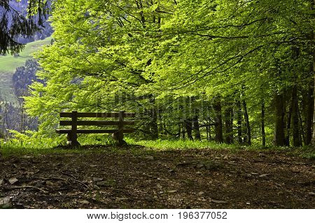 Bench in a beech forest in spring Les Avants Vaud Switzerland