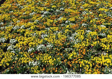 Mosaic of spring flowers in a park  Switzerland