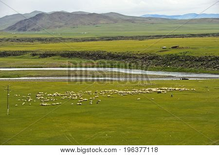 Flock of black sheep grazing on a vast plain in the Orkhon Valley Khangai Nuruu National Park Mongolia