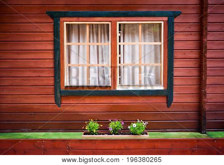 Windows with curtains and some green flowers on painted wooden house